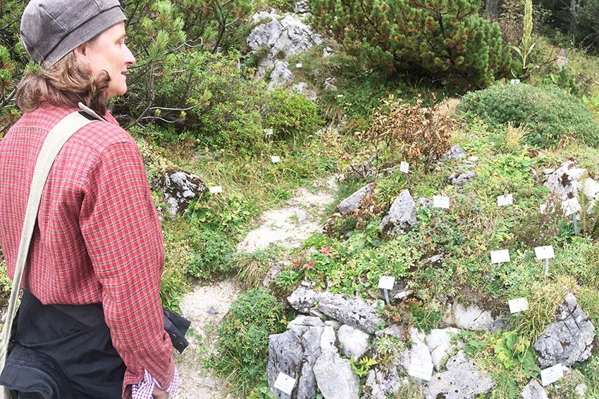 Botanische Tuin Alpiene Planten