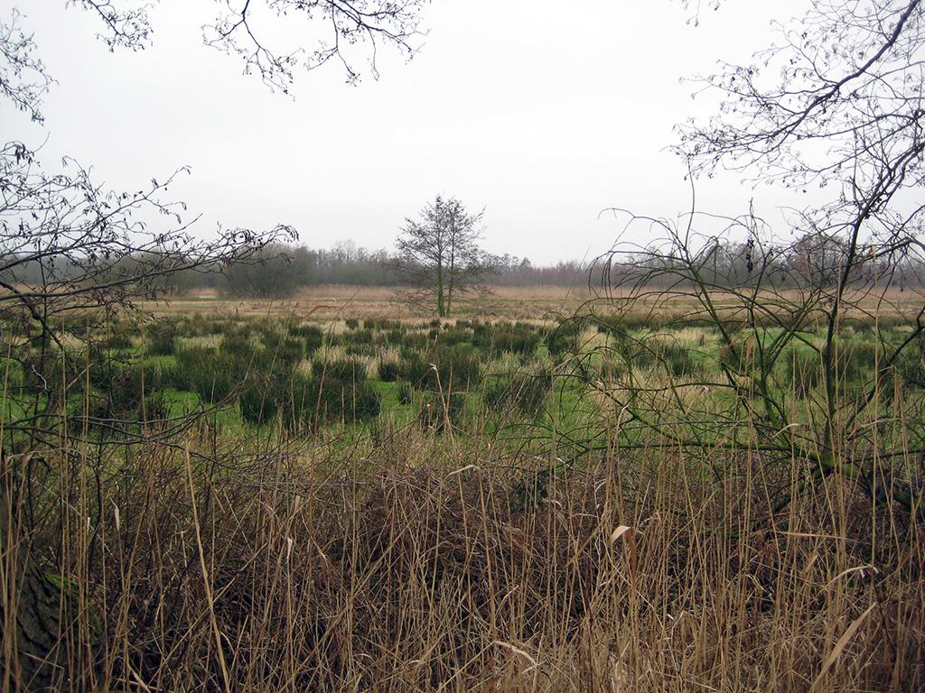 Blauwe Hel-Bennekomse Meent-Bennekomse Hooilanden, Excursie Landschapsecologie 2008