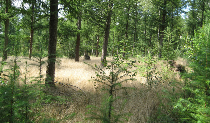 Veluwe Langs LF4 In 2008
