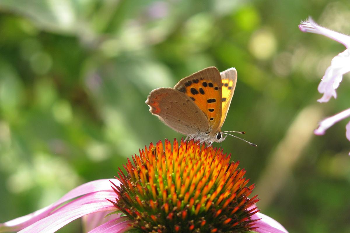 Geen Tuin Zonder Vlinders