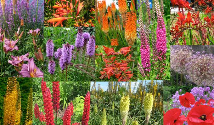 Knalplanten, Vuurwerkplanten