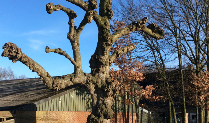 Leilinde Langenboom (Noord-Brabant)