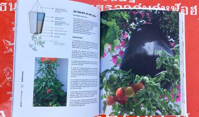 Hangende Tomatenplant