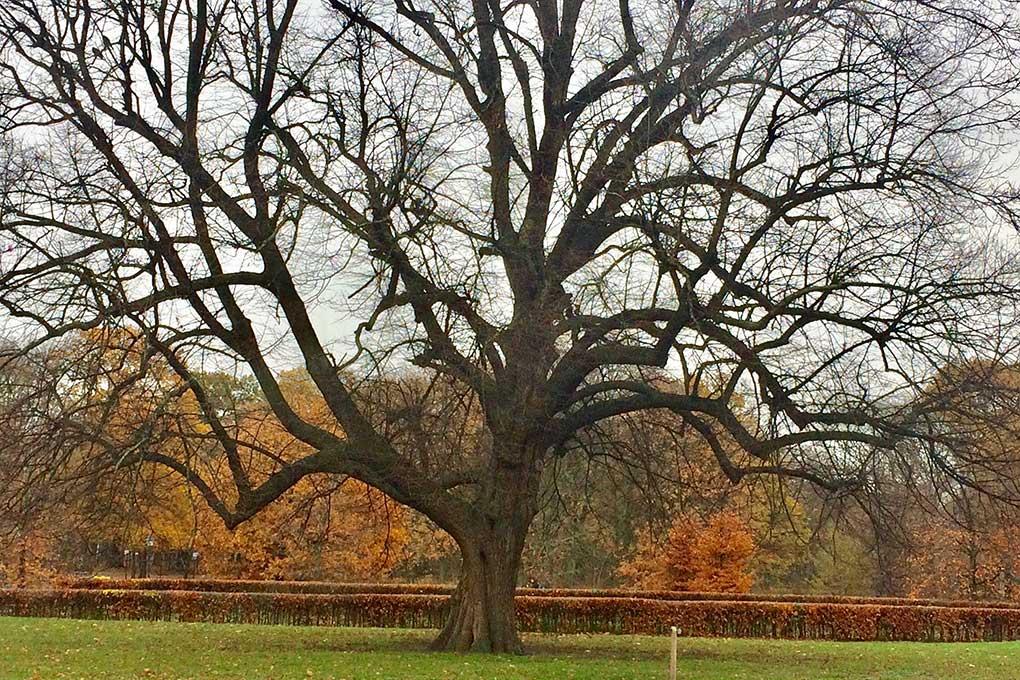 Lindeboom In Den Haag